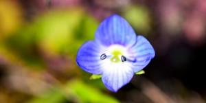 Yenice'nin Çiçekleri -68
