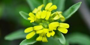 Yenice'nin Çiçekleri -71