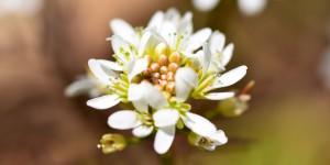 Yenice'nin Çiçekleri -72