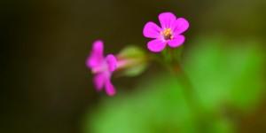 Yenice'nin Çiçekleri -74