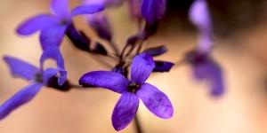 Yenice'nin Çiçekleri -76