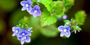 Yenice'nin Çiçekleri -79