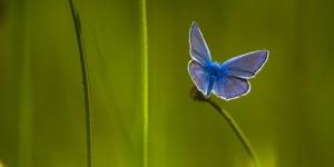 İda'nın Kelebekleri -148