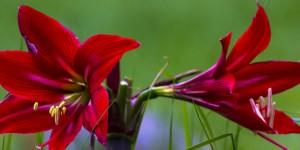 İda'nın Çiçekleri -189