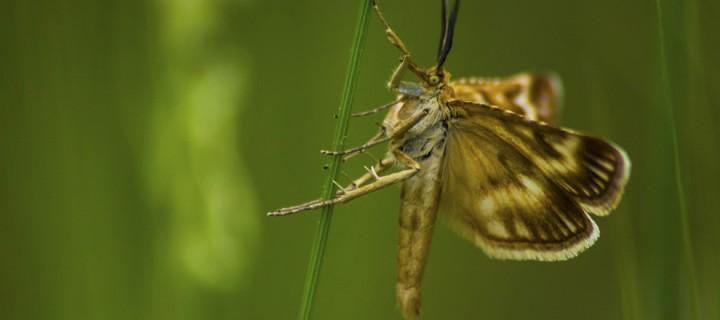 İda'nın Kelebekleri -154
