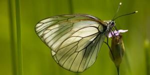 İda'nın Kelebekleri -150