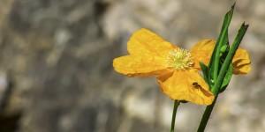 İda'nın Çiçekleri -190
