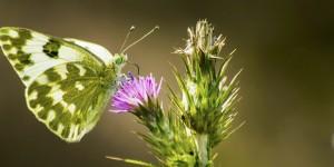 İda'nın Kelebekleri -151