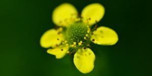 Yenice'nin Çiçekleri -94