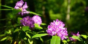 Yenice'nin Çiçekleri -95