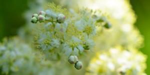 Yenice'nin Çiçekleri -97
