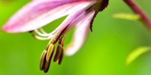 Yenice'nin Çiçekleri -103