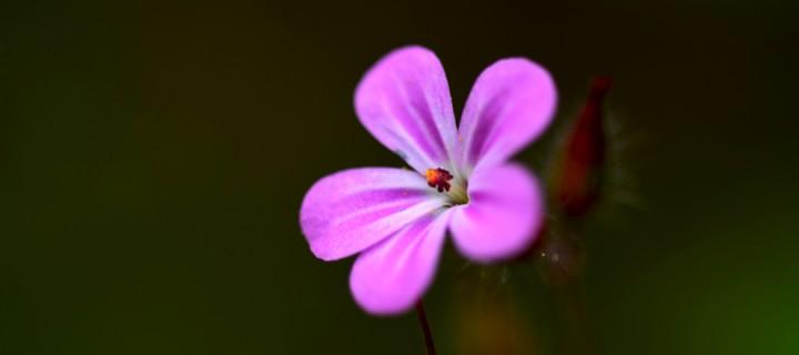 Yenice'nin Çiçekleri -104