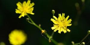 Yenice'nin Çiçekleri -131