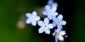 Yenice'nin Çiçekleri -135