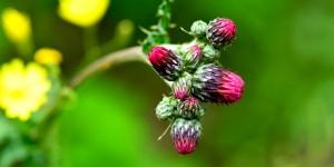 Yenice'nin Çiçekleri -139
