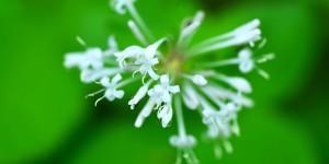 Yenice'nin Çiçekleri -141