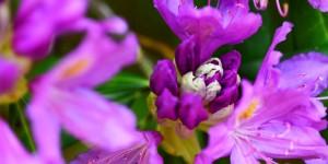 Yenice'nin Çiçekleri -106