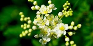 Yenice'nin Çiçekleri -108
