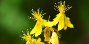Yenice'nin Çiçekleri -112