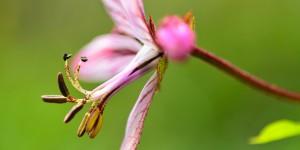 Yenice'nin Çiçekleri -116