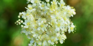 Yenice'nin Çiçekleri -129