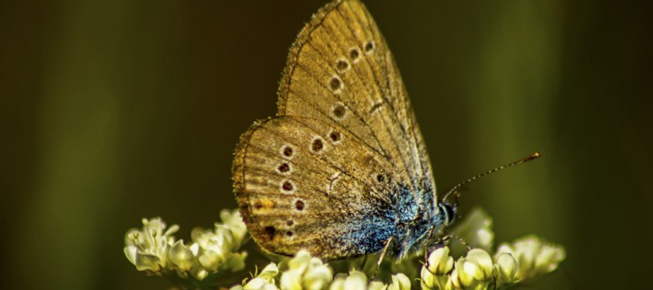 İda'nın Kelebekleri -161