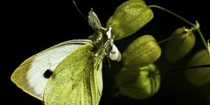 İda'nın Kelebekleri -162