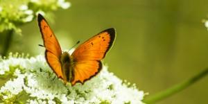 İda'nın Kelebekleri -156