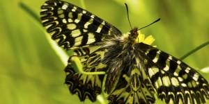 İda'nın Kelebekleri -157