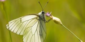 İda'nın Kelebekleri -158