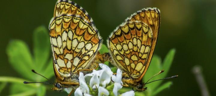 İda'nın Kelebekleri -159