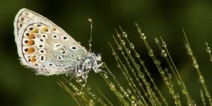 İda'nın Kelebekleri -160