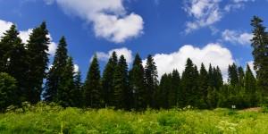 30 Haziran / Yaprak Fırtınası (Tüm Bitkilerin Yapraklandığı Dönem)