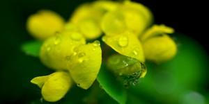 Yenice'nin Çiçekleri -144