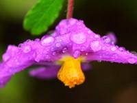 Yenice'nin Çiçekleri -145