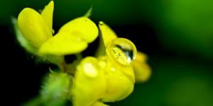 Yenice'nin Çiçekleri -162