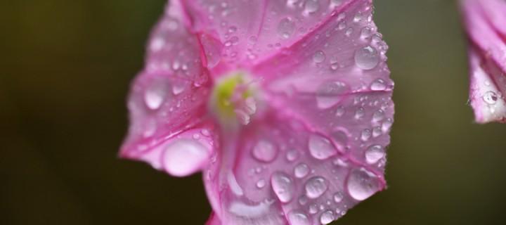 Yenice'nin Çiçekleri -166