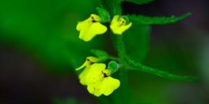 Yenice'nin Çiçekleri -168