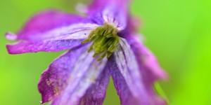 Yenice'nin Çiçekleri -170