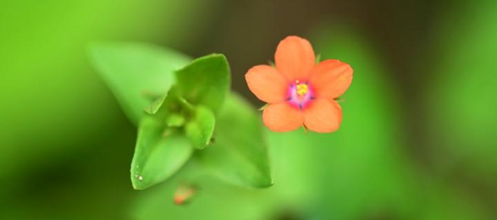 Yenice'nin Çiçekleri -171