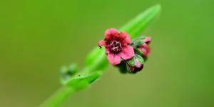 Yenice'nin Çiçekleri -174