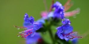 Yenice'nin Çiçekleri -178