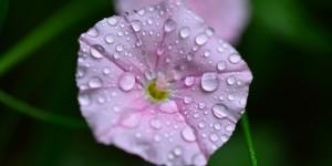 Yenice'nin Çiçekleri -146