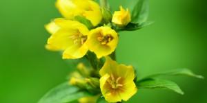 Yenice'nin Çiçekleri -148
