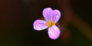 Yenice'nin Çiçekleri -149
