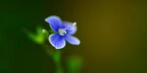 Yenice'nin Çiçekleri -151