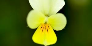 Yenice'nin Çiçekleri -158