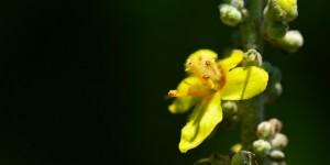 Yenice'nin Çiçekleri -160