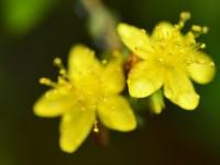 Yenice'nin Çiçekleri -180